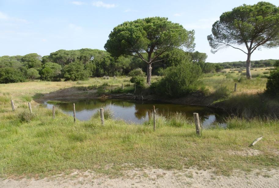 """Europa ve con """"mucha preocupación"""" la gestión en Doñana, dice ecólogo Scheffer."""