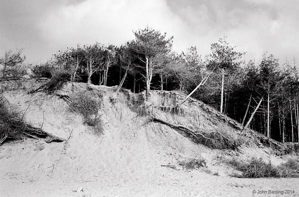 tree_beach