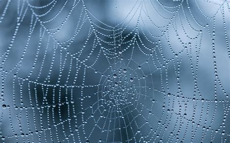 17 Incredible spiderweb wallpapers with water drops and ice   HD Wallpapers