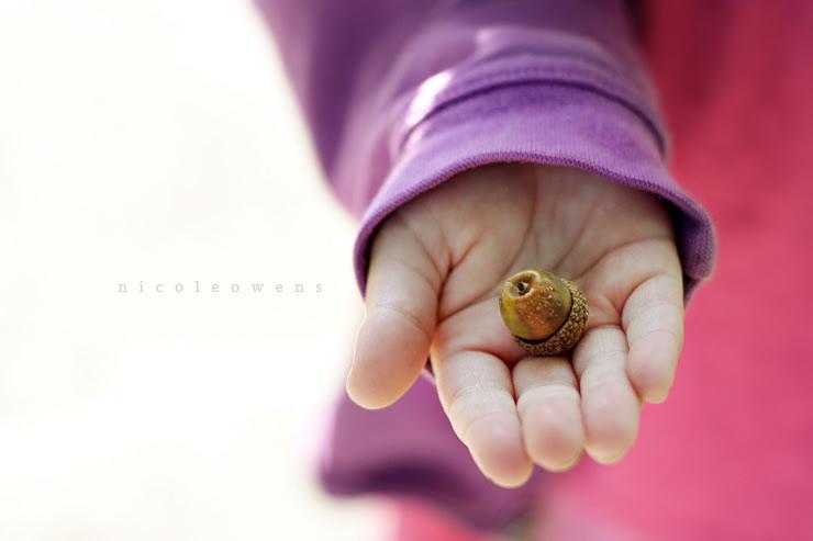 acorn.