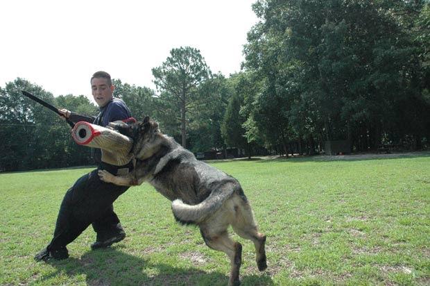 Instrutor Patrick Ashley treina a cadela Cassandra. (Foto: Barcroft Media/Getty Images)
