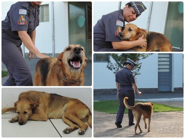Cadela encontrou com os policiais os carinhos e cuidados para viver (Foto: Caio Gomes Silveira/ G1)