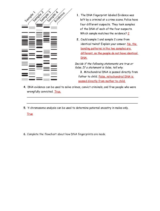 32 Dna Fingerprinting Worksheet Answer Key - Free ...
