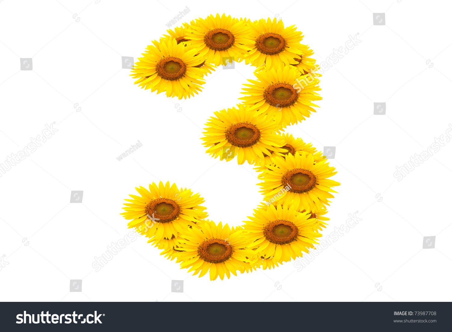 Number 3, Sunflower Isolate On White Background Stock ...