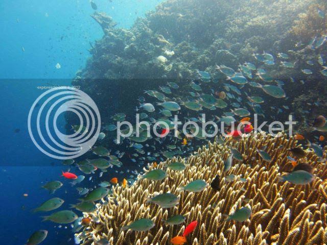 Pemandangan indah bawah laut pulau menjangan