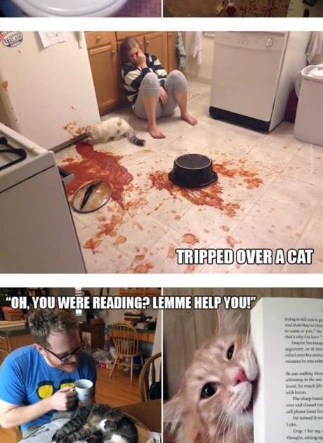hilarious cat pictures
