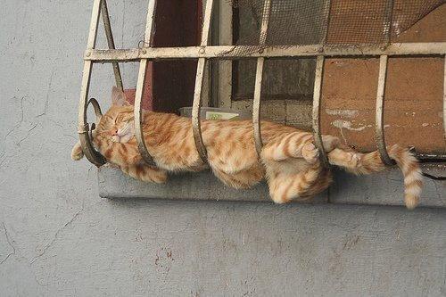 Dormindo na janela