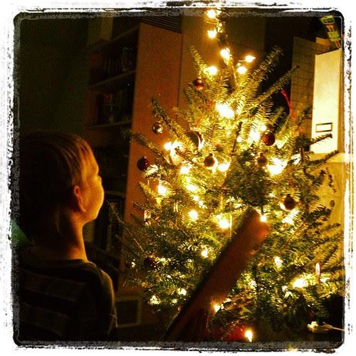 Dashiell admiring our mini tree
