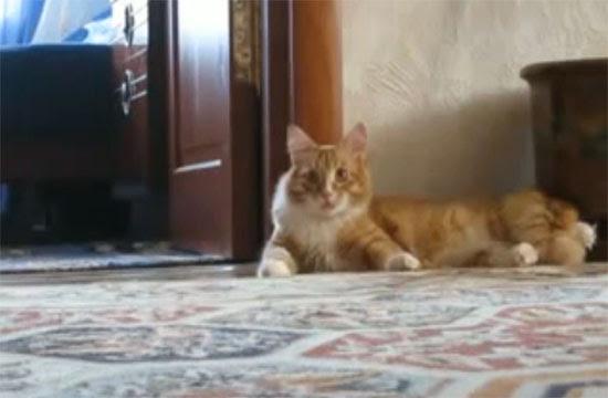Η γάτα «Michael Jackson»