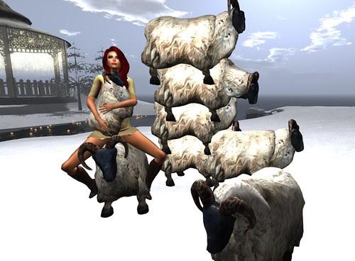 A&I sheep by Kara 2