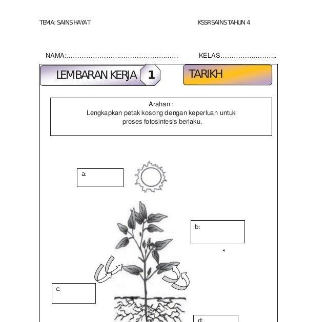 Soalan Sains Tahun 4 Proses Hidup Tumbuhan Selangor T