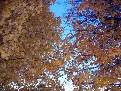 Foliage_102610b