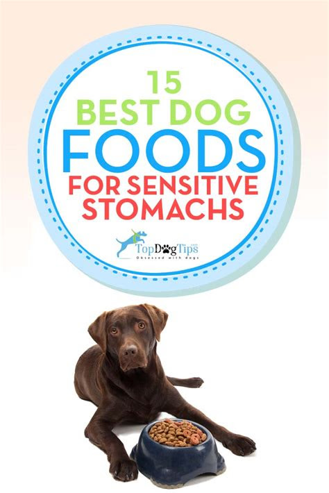 top   sensitive stomach dog foods  upset stomachs