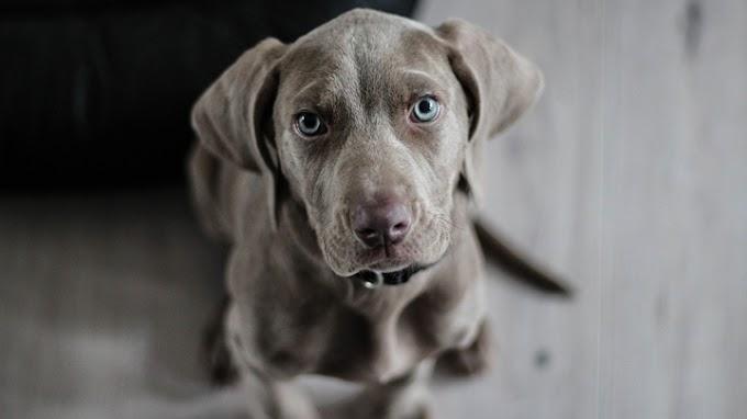 Las razones por las que tu perro tiene miedo de otros perros