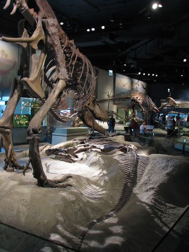 Daspletosaurus and Lambeosaurus