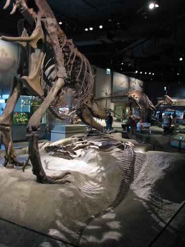 Daspletosaurus and Lambeosaurus