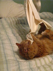 Jasper attacks the pillow case