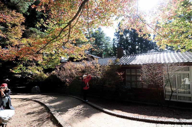 福壽山農場楓紅-31