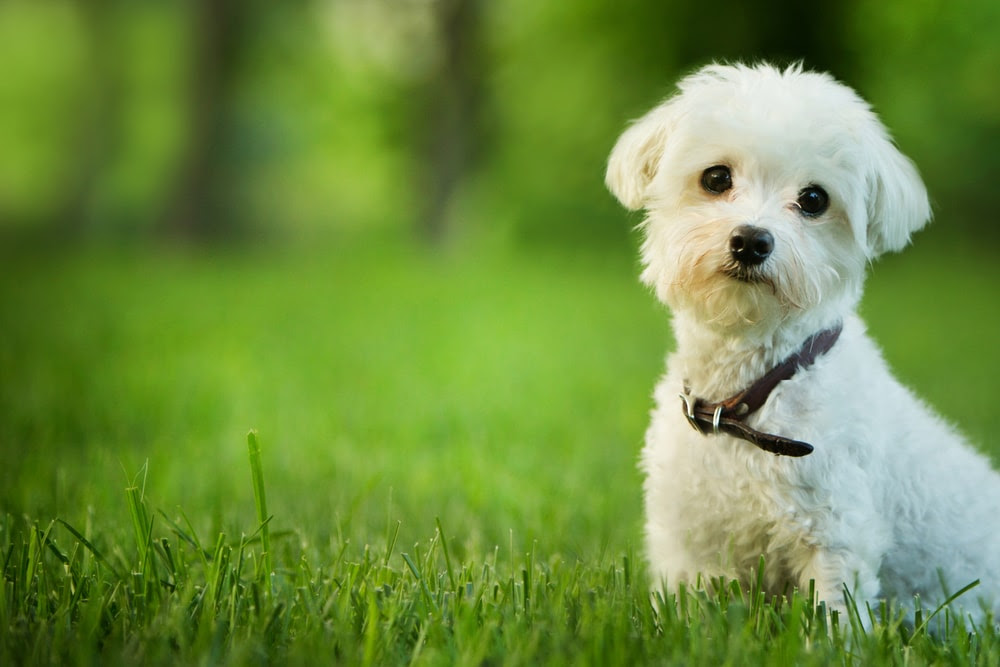 Top 16 Small Dog Breeds | petMD | petMD