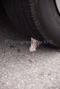 gum stuck under a car tire