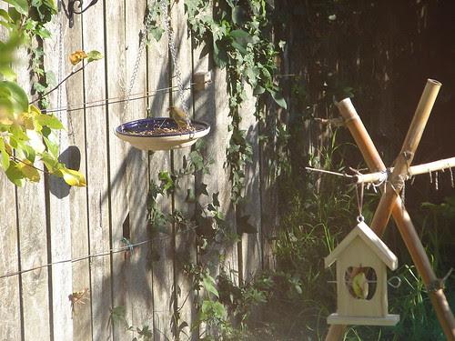 bird watching