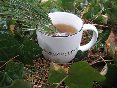 Pine Needles in Tea