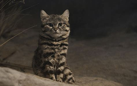This sweet looking kitty is one of Africa's deadliest cats   MNN   Mother Nature Network