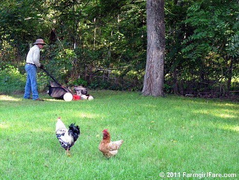 Lawn care chicken patrol 1 - FarmgirlFare.com