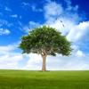 Christoph Duyster - US Trees 2.0 artwork