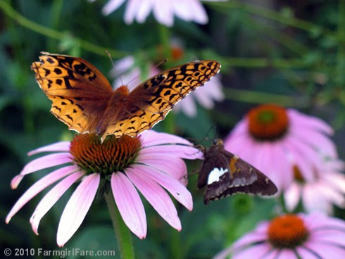 Pollinator Party 4