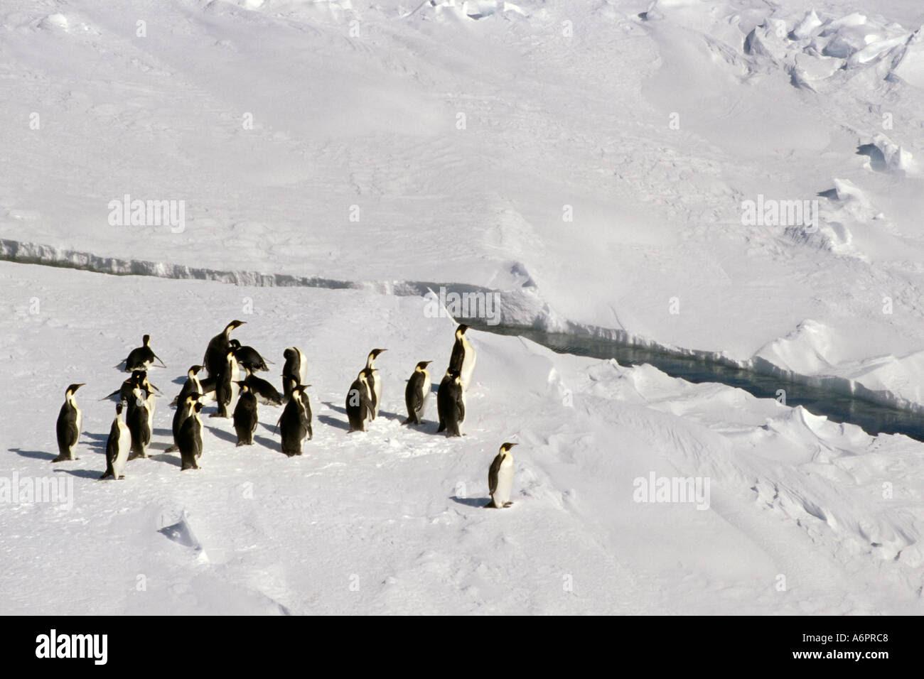 Resultado de imagen de larsen ice