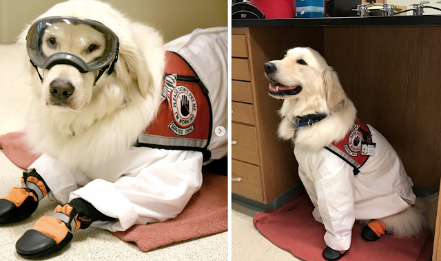 Should Scientists Be Allowed To Have Their Support Dogs In Labs?