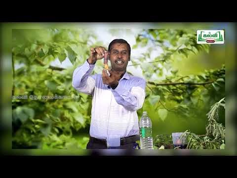 6th Science தாவரங்கள் வாழும் உலகம் பருவம் 1 அலகு 4 பகுதி1 Kalvi TV