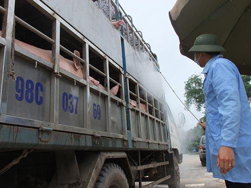Cán bộ trạm kiểm dịch Hữu Lũng (huyện Hữu Lũng, tỉnh Lạng Sơn) kiểm tra