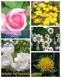 ชาดอกไม้ 5 สี 5 ชนิดในซองเดียว 5 in 1 Coloring Flower Tea