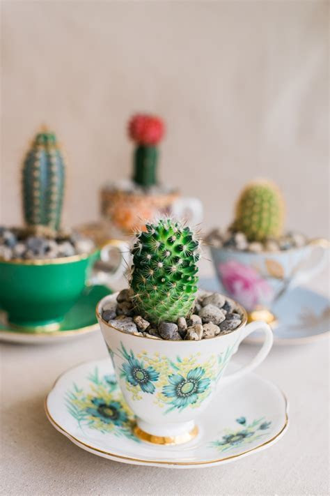 DIY Cactus in a Teacup   Intimate Weddings   Small Wedding