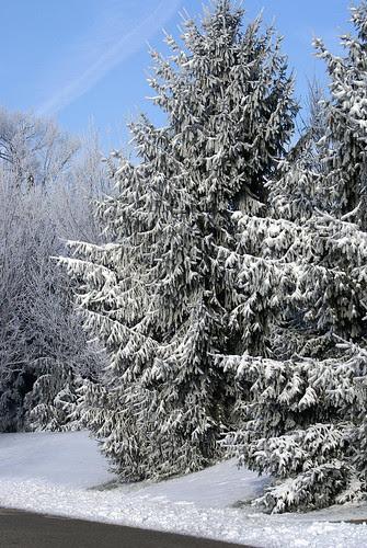 Frozen-Fog-5_edited-1