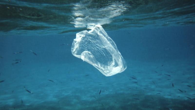 Resultado de imagem para plásticos sacolas oceanos
