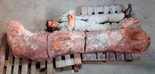 Fotografía cedida por el Museo Egidio Feruglio de un hombre junto al fémur del dinosaurio encontrado en la provincia argentina de Chubut (sur), cerca de la localidad de Las Plumas.