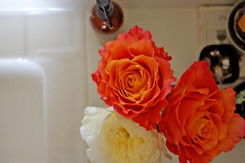 garden roses, trio