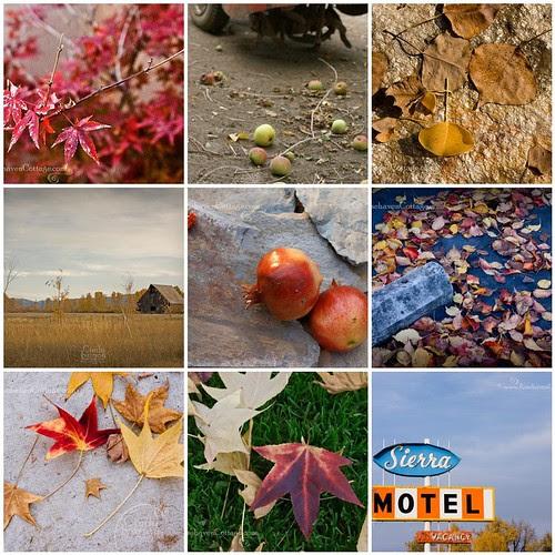 Bits of Autumn