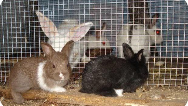 Consejos de mantenimiento de la jaula de tu conejo