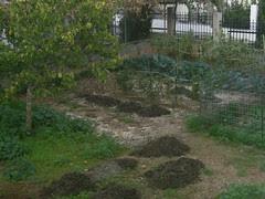 dung mounds
