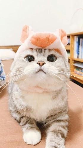 Kucing Lucu Hewan Lucu