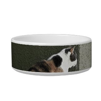 Pet Bowl - Calico Cat or Tortoiseshell Cat petbowl