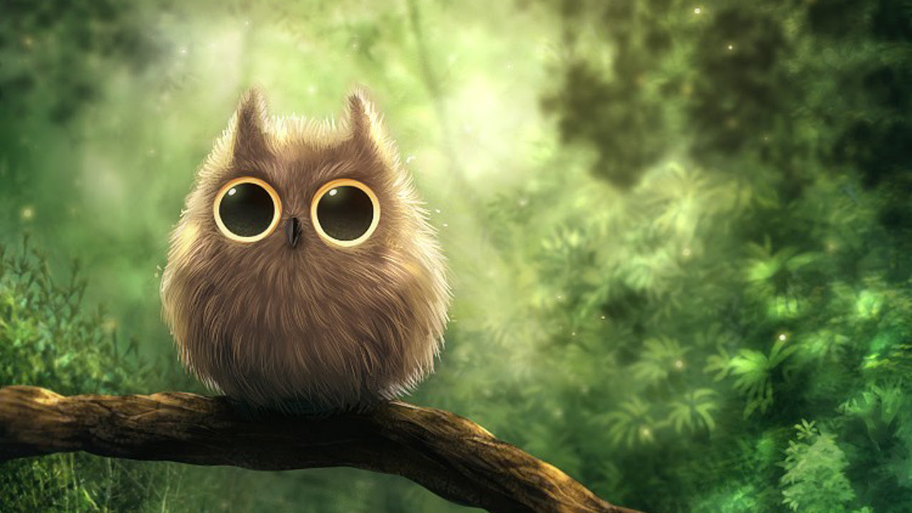 Cute Owl Wallpaper 1280x720 452