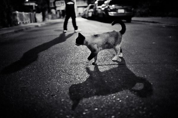 neighbourhood cat
