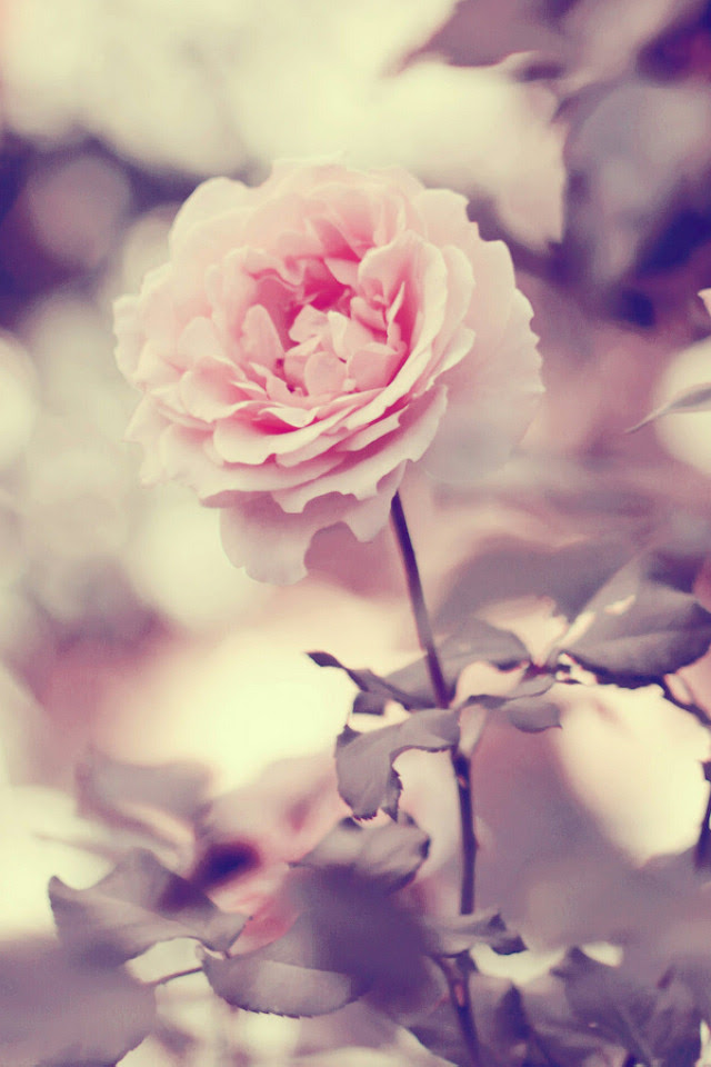 Home Screen Wallpapers Of Flowers
