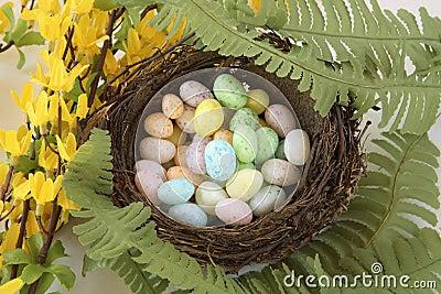O Ninho Dos Pássaros Do Feijão De Geléia Eggs Com Flores