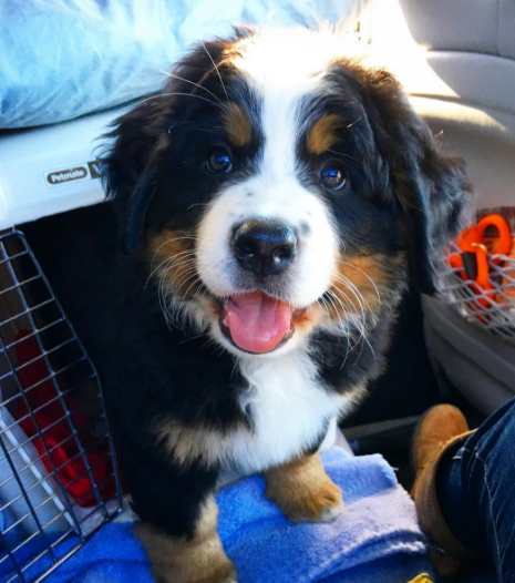 This photogenic pooch who might be the cutest puppy in the history of all puppies everywhere.